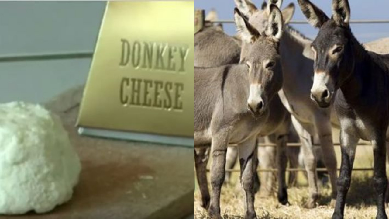 Why is donkey cheese so expensive?