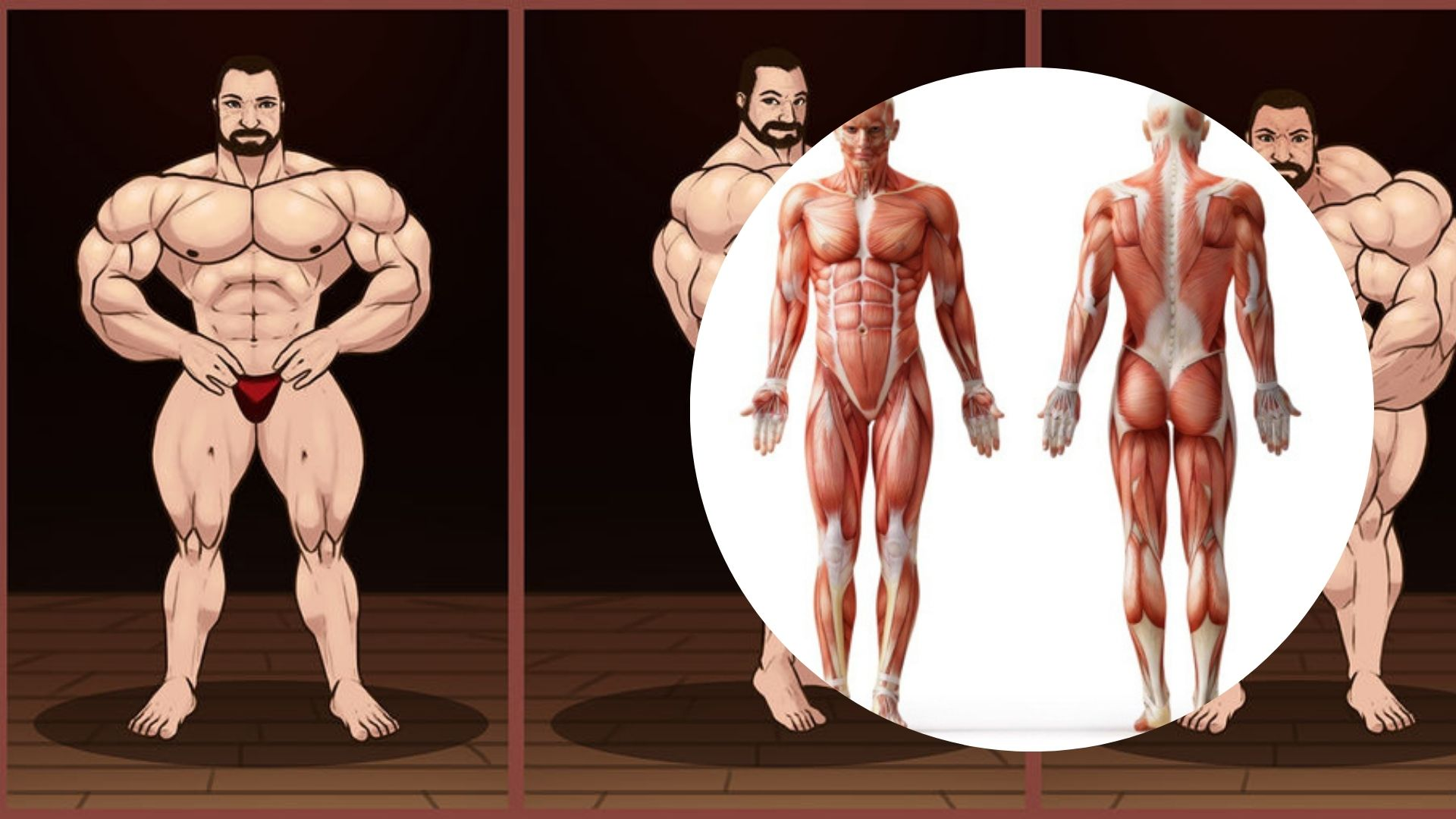 What makes muscles grow? things you need to know about muscle building