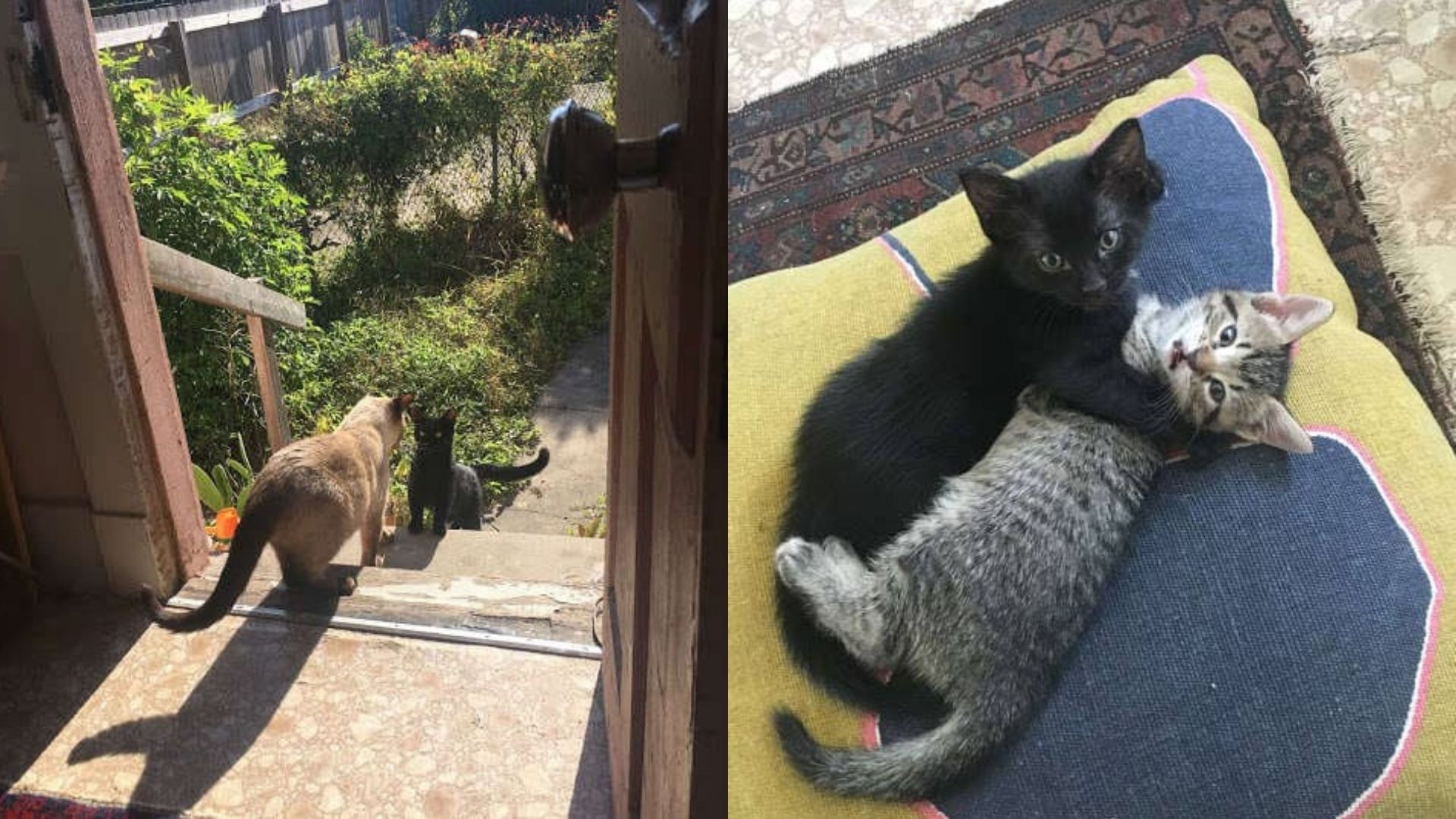 This stray cat gets a new home so that she can have her babies