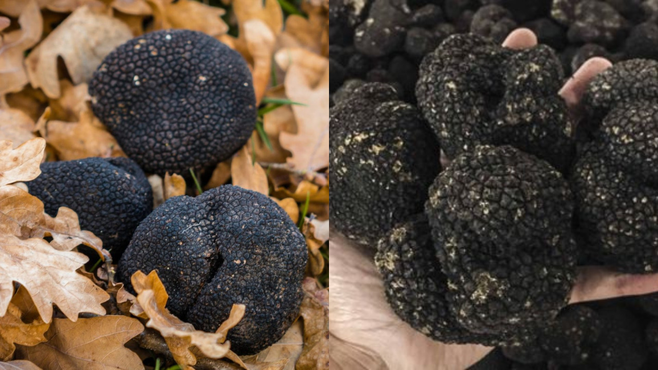 Why Are Real Truffles So Expensive?