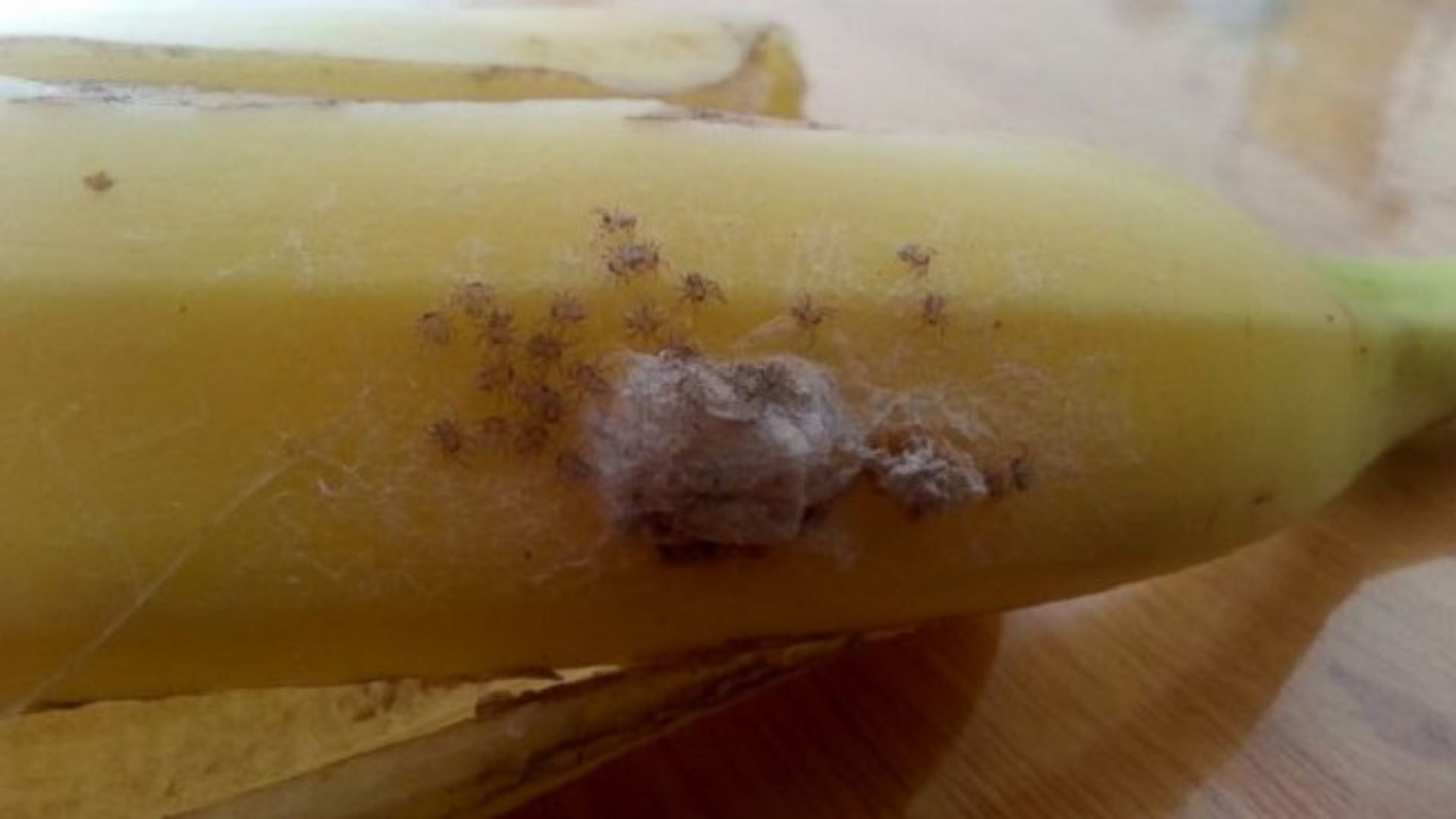 If you see white spots on banana throw it away immediately